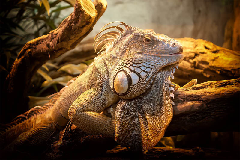top-10-interesting-facts-about-lizards