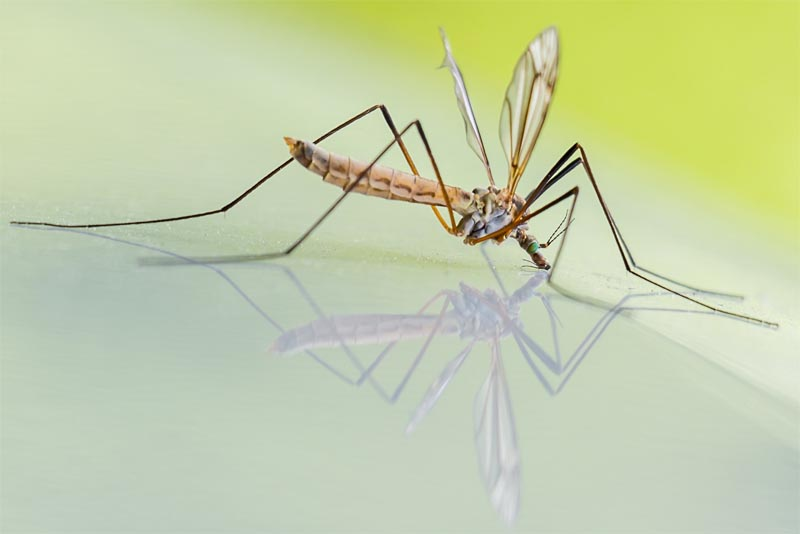 top-10-interesting-facts-about-mosquitoes