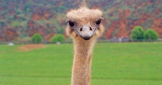 top-10-interesting-facts-about-ostrich