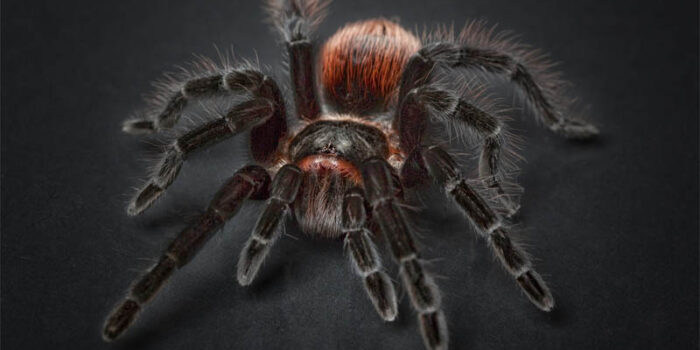 top-10-interesting-facts-about-spiders
