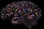 top-10-interesting-facts-about-the-human-brain