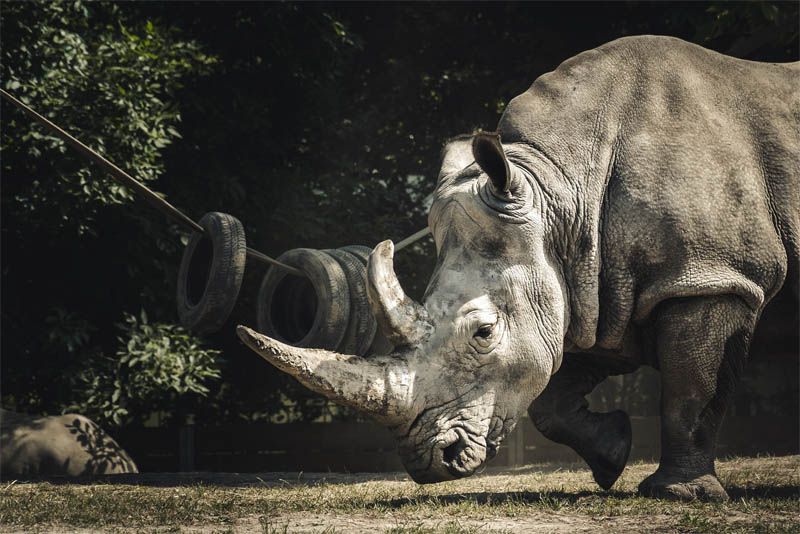 top-10-interesting-facts-about-the-rhinoceros