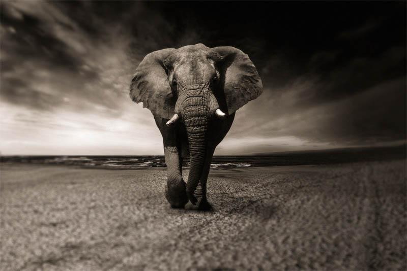 elephants-exhibit-self-awareness