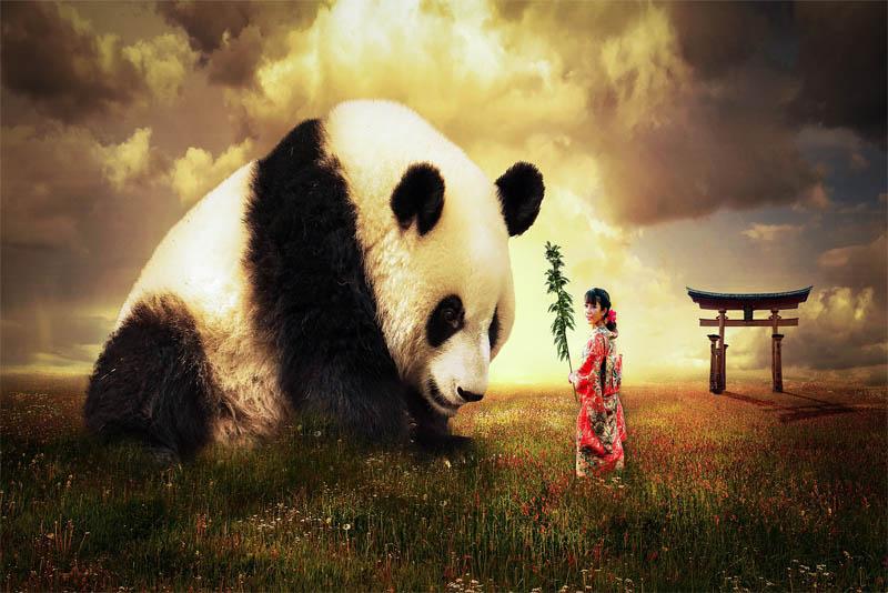 giant-panda