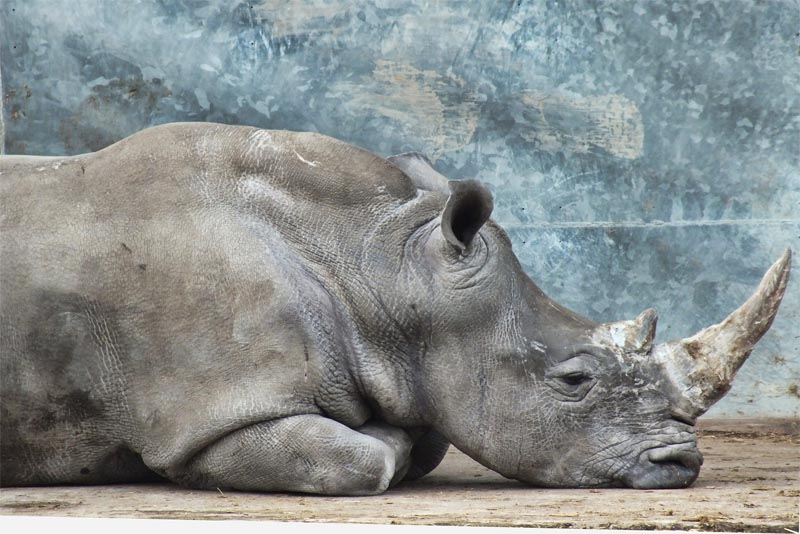 higher-wildlife-extinction-rates
