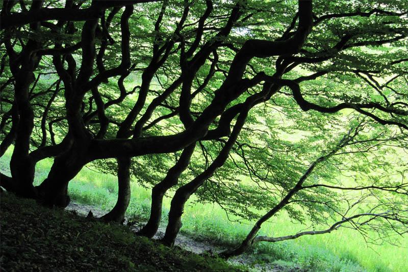 rold-skov-forest