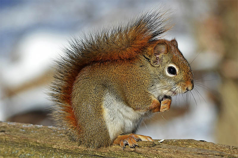 squirrels-can-be-deceptive