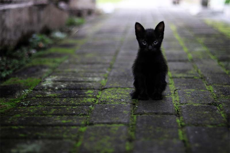 10-false-myths-uncovered-about-cats
