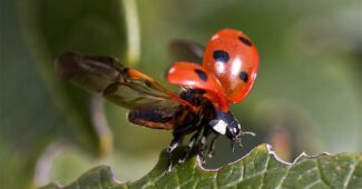 benefits-of-insects-for-humans
