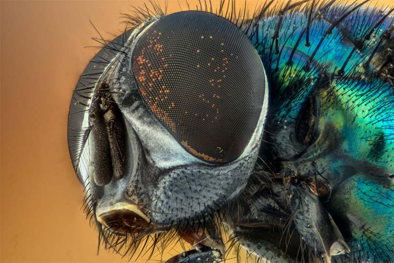 facts-about-insects