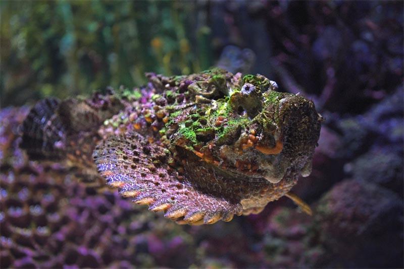 the-stonefish
