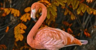 top-10-interesting-facts-about-flamingos