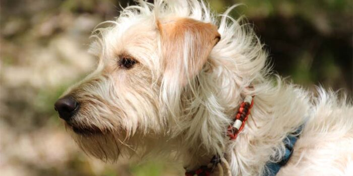 best-flea-collar-for-dogs