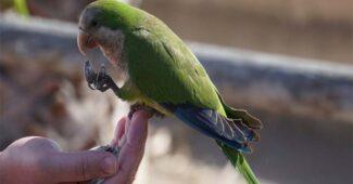best-food-for-birds